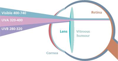 UV penetration on the eye